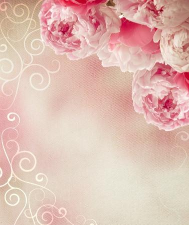 pfingstrosen: Jahrgang Pfingstrosen auf Leinwand Hintergrund mit einem Retro-Gefühl als Glückwunschkarte oder für eine Liebesbotschaft Großen Lizenzfreie Bilder