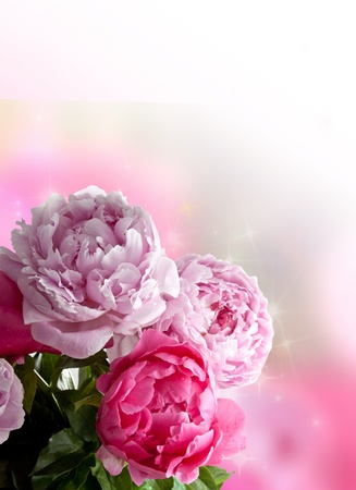 Beautiful pink peonies on white background  Plenty of copy space, perfect as a greetings card or for a love message