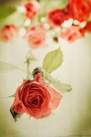 Vintage rose on watercolor background  Distressed look for a retro feel  Focus on bud in the foreground  photo