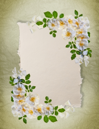Vintage white roses frame on distressed paper background with room for a message  Great as a greetings card, for a love message and so on  Plenty of copy space  photo