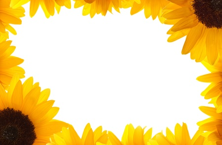 Happy yellow frame made of beautiful bright sunflowers isolated on white  Summer concept, great for a greetings card or party invite