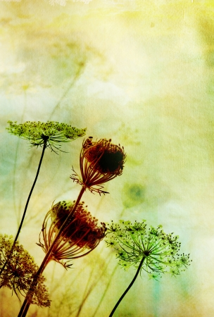Silhouette of beautiful wild flowers against watercolour background with more blurry flowers in the back  A combination of hand-painted and photographic elements  The plant is called bird photo