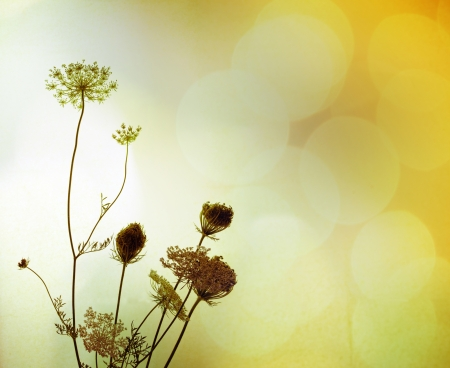 Silhouette of beautiful wild flowers against blurry background full of light, with a faint texture  The plant is called bird photo
