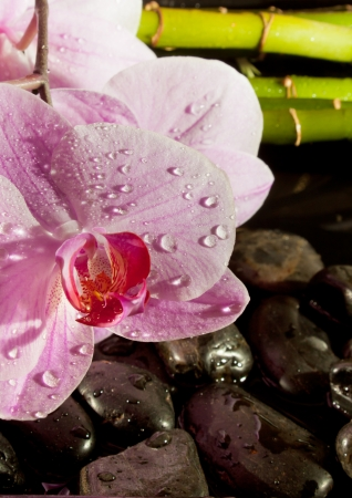 Spa scene with pink orchids covered in dew, zen pebbles and bamboo  Focus on the orchid  Detail  photo