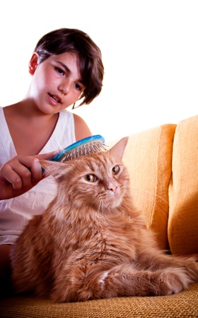 A long-haired ginger cat being groomed by her young friend  Focus on the cat, looking into the camera  photo