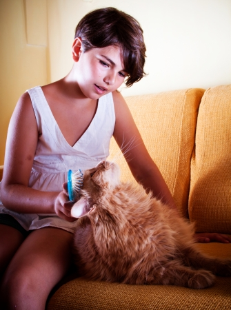 A long-haired ginger cat being groomed by her young friend  Focus on the cat  photo