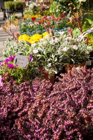 Beautiful spring flowers for sale at street market  Focus on pink heather in the foreground  photo