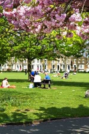 pic nic: City people enjoying a park in the spring, having a pic-nic on the grass  Focus on the pink blossoms