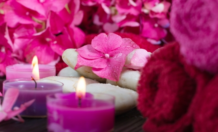 shallow depth of field: Close-up on pink hydrangea flower. Spa scene, relaxation, pampering. Shallow depth of field. Stock Photo