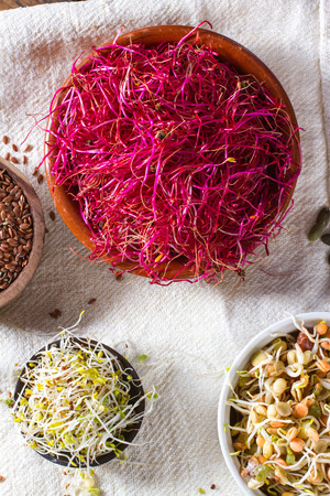 sprouts: Colourful and healthy red beet sprouts, with bean sprouts, linseed, alfalfa and pumpkin seeds also in the frame. Stock Photo