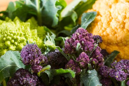 cruciferous: Close up on purple broccoli, with yellow cauliflower and romanesco cauliflower in the background. Wonderful contrast of complementary colours.