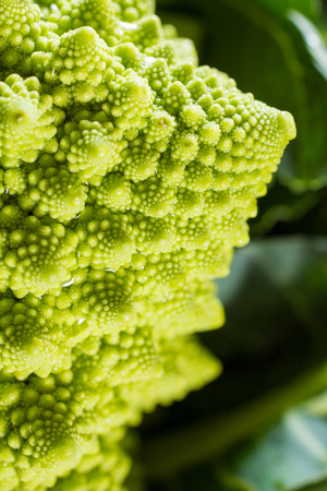 sequences: Close up on romanesco cauliflower, with its beautiful fractal shapes, spirals, Fibonacci sequences.