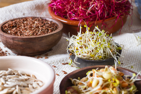 seeds of various: Colourful and healthy crunchy mixed seeds and various sprouts. Alfalfa, bean sprouts, red beet sprouts, linseed.