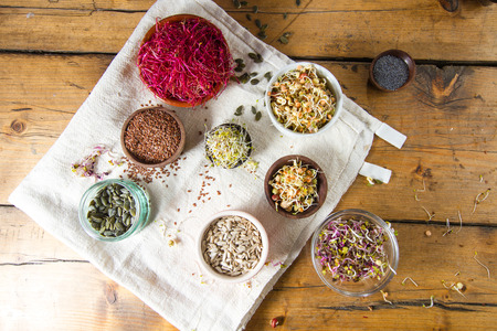 china rose: Colourful and healthy crunchy mixed seeds and sprouts: China rose sprouts, bean sprouts, red beet sprouts, alfalfa, poppy seeds, sunflower seeds, linseed. Stock Photo