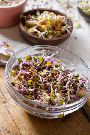 seeds of various: Colourful and healthy crunchy mixed seeds and various sprouts. China rose, alfalfa, bean sprouts.