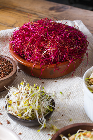 seeds of various: Colourful and healthy crunchy mixed seeds and various sprouts. Focus on red beet sprouts, with alfalfa and linseed also in the frame. Stock Photo