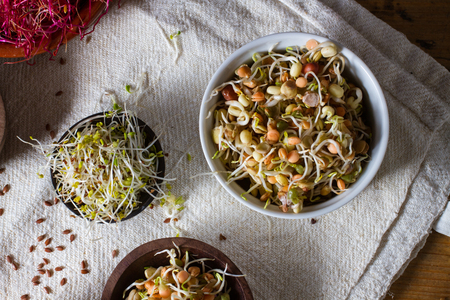 sprouts: Colourful and healthy crunchy mixed seeds and various sprouts. Alfalfa, bean sprouts. Stock Photo