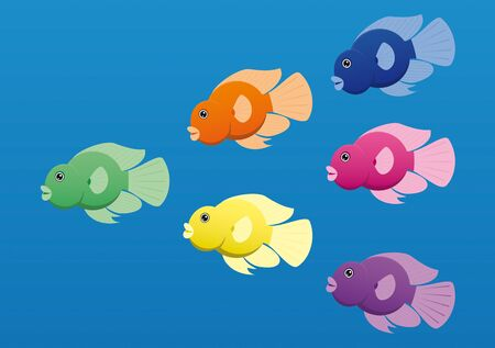 dorsal: A image of jellybean  or parrot  cichlid fish in bright colors  Illustration