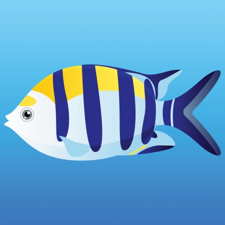 indian fish: A illustration of a yellow, blue and white Indo-Pacific seargent fish on blue background