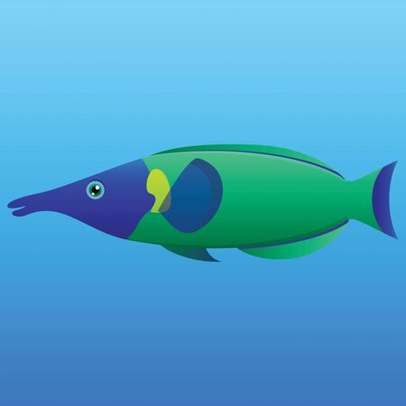 A illustration of a blue, lime and green long nosed bird wrasse fish on blue background  Stock Vector - 19511088