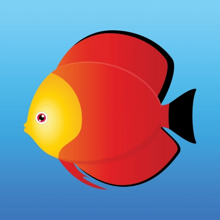 A illustration of a yellow, black and red monk discus fish on blue background  Stock Vector - 19511085