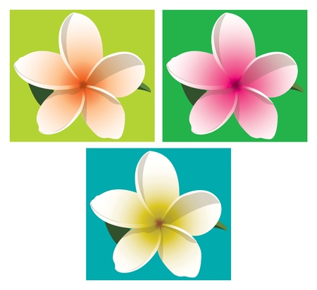 Orange, pink and yellow frangipani on coloured backgrounds  Vector