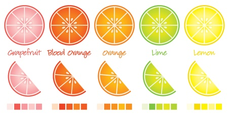 orange slice: Citrus slices and wedges in vector format complete with swatches