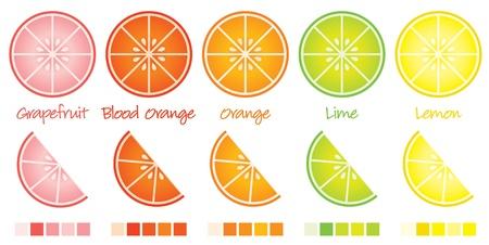 citricos: Rodajas de c�tricos y cu�as en formato vectorial completan con muestras Vectores