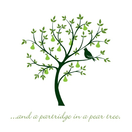 12 days of christmas: a partridge in a pear tree  Christmas card