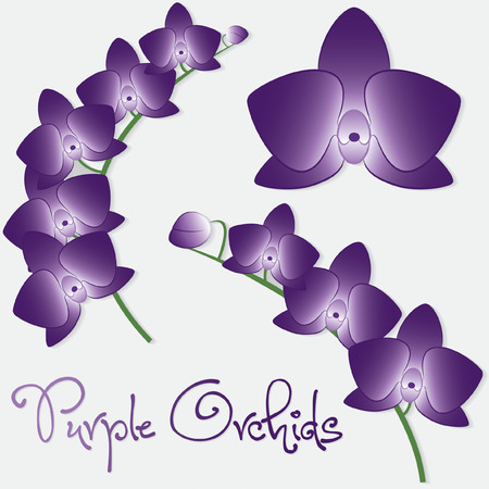 Orchid flower set in vector format  Vector