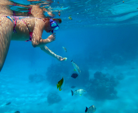 moorea: Hand feeding fish on the reef with bread in the lagoon of Moorea, French Polynesia. Stock Photo