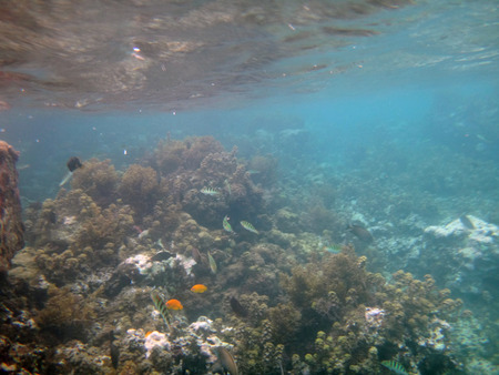 polynesia: Marine life of Cooks Bay, Moorea, French Polynesia.