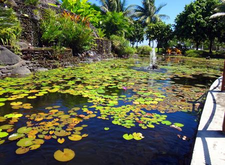 garden eel: Ornamental fish pond of Jardins de Paofai (Garden of Paofai) in Papeete, French Polynesia. Stock Photo