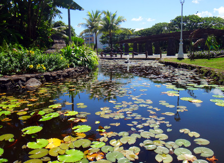 garden eel: Ornamental fish pond of Jardins de Paofai Garden of Paofai in Papeete, French Polynesia.