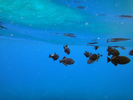 wrasse: Sea life of Molokini Crater, Maui, Hawaii.