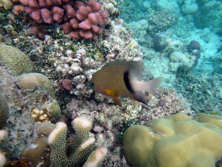 Sealife of Champagne Bay, Espiritu Santo, Vanuatu 스톡 콘텐츠