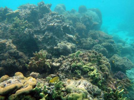 Sealife of Champagne Bay, Espiritu Santo, Vanuatu Stock Photo