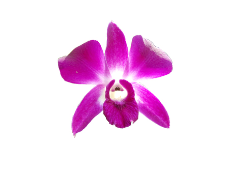 Isolate Purple orchids, Violet orchids. Orchid is queen of flowers. Orchid in tropical garden. Orchid in nature Stock Photo