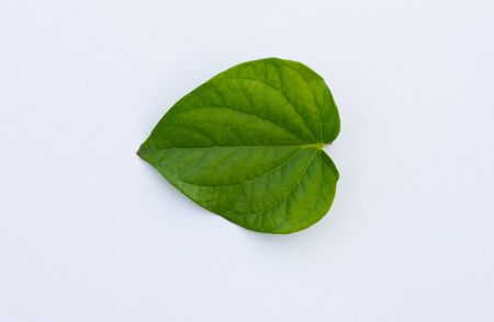 Betel leaves isolate on a white background 免版税图像