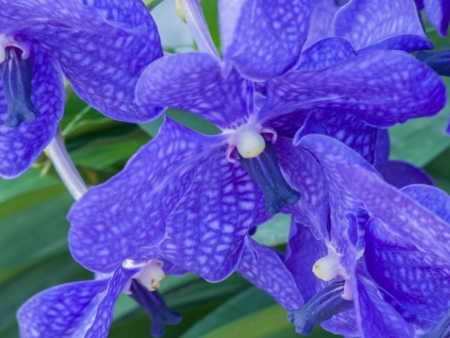 the blooming orchid flowers  Stock Photo