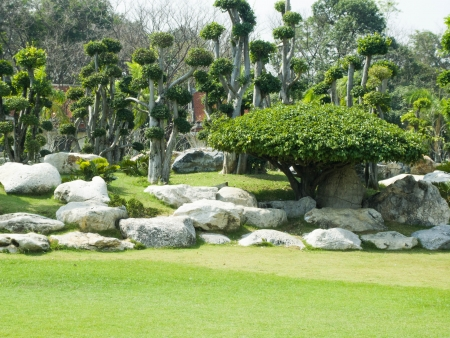 Bending tree and rock garden in Phutthamonthon , Nakhon Pathom   province