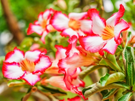 drought    resistant plant: a tree with beautiful flower and auspicious name.