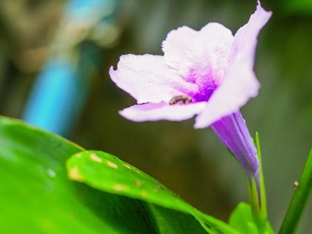 The beautiful purple blue flower