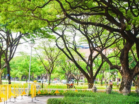 A photograph of forest-like garden in town