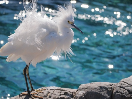 ciconiiformes: The bird with long neck , long legs , long pointed mouth , and white hairy body.