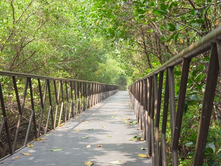 mangrove forest: A wooden path to the mangrove forest. Stock Photo