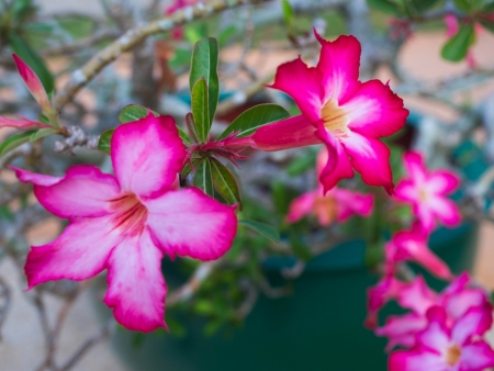drought    resistant plant: The colorful flowers with auspicious names.