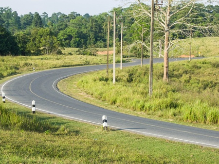 The two - lane curved road run across the conserved  forest