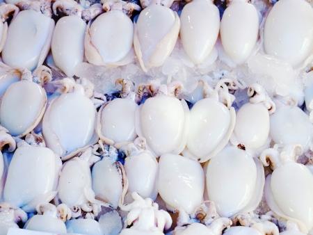 phylum: Cuttlefish is invertebrate animal  in phylum Mollusca                                                                Stock Photo
