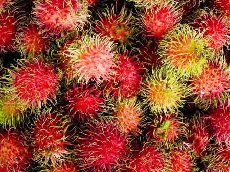 tannins: Rambutan is a tropical and sweet flavored fruit that is very popular in Southeast Asia